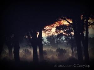 Paisagem Natural/Momentos escuros,  em que em mim não há ninguém...