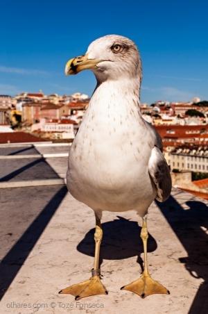 /My Lisbon!