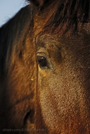 /Bright brown horse....