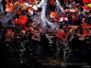 /Recordando o Outono...