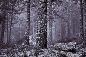 Paisagem Natural/vestida de bruma e mistério