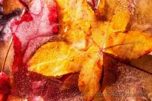 Paisagem Natural/Outono gelado