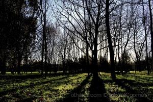 Paisagem Natural/Sombras do amanhecer