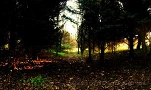Paisagem Natural/Contraste, Luz e Cor