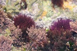 Paisagem Natural/Cores subaquáticas
