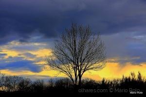 Outros/O Inverno do Nosso Descontentamento !!!!!!