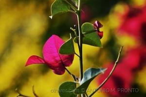 Macro/color