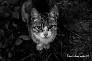Animais/Selvagens Urbanos 6 - De Olho no Céu