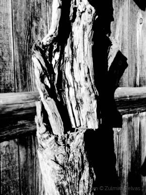 /O tronco e a sombra