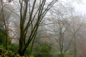 Paisagem Natural/A magia do som do silêncio!