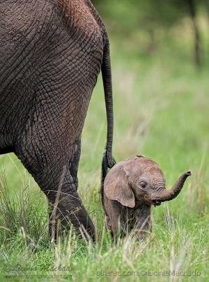 /Uma pequena cria de Elefante