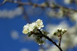 Paisagem Natural/Springest Flower