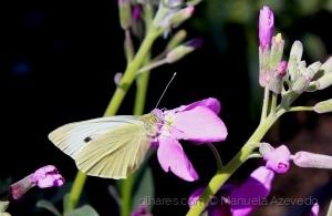 Macro/Apenas borboleta