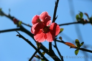 Macro/Spring is Coming II