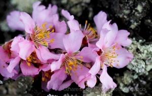 Macro/flores de cetim
