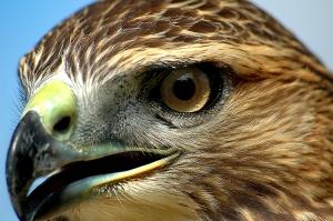 /Eagle eye