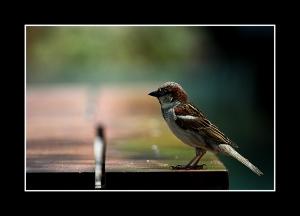 /Bird on a table