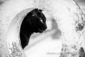 Animais/Black Panther
