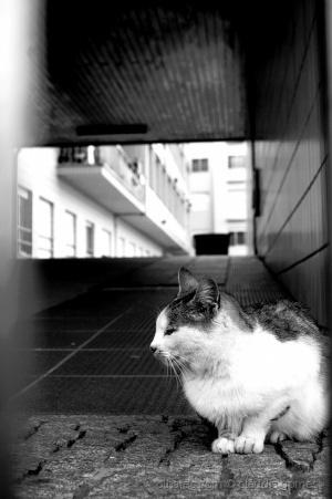 Animais/Na minha solidão...