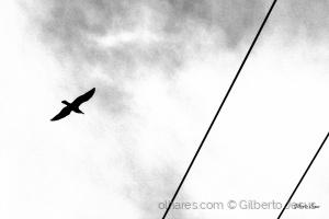 Paisagem Urbana/A gaivota e a geometria