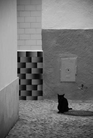 Animais/O gato
