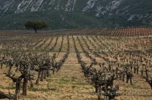 Paisagem Natural/vinhas da Arrábida