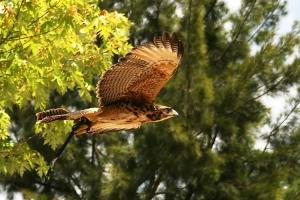 /Fly like an eagle