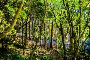 Paisagem Natural/Floresta encantada...