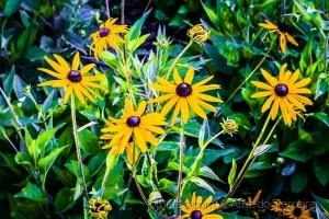Paisagem Natural/Jardim florido...