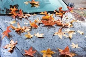 Paisagem Urbana/Folhas caídas