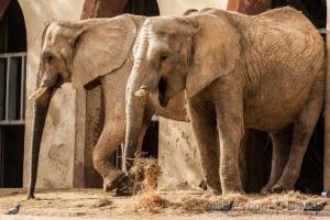 Animais/Elefantes