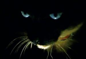 /Um gato na escuridão