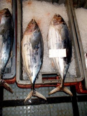 /Ólho peixinho fresco e barato....