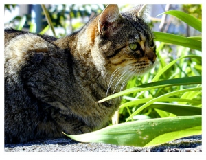 Animais/Gato vadio