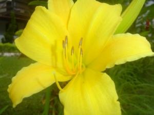 Outros/Flor Amarela