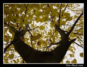 /Outono VII
