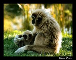 /...família no zoo...