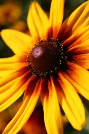 /Flor amarela