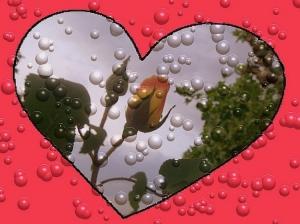 Outros/um coração com uma rosa
