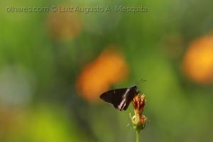 Macro/''fly..''