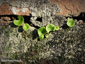Macro/A Natureza encontra sempre o seu caminho