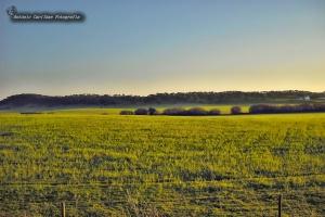 Paisagem Natural/Verdes são os campos (Poema)