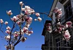 Outros/Uma rua cor de rosa ...