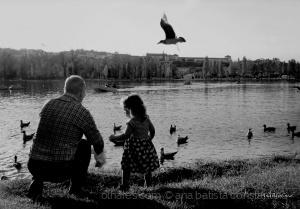 Gentes e Locais/Vamos dar pão às gaivotas ...