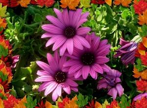 Outros/flores e mais flores