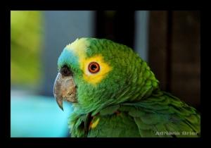 Animais/Verde e Amarelo