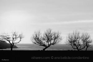 Paisagem Natural/As três árvores e o mar ...