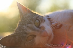 Outros/vida de gato...