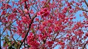 Paisagem Natural/Eu vejo flores em você