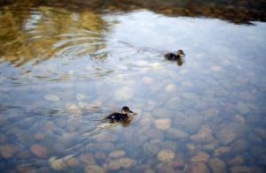 Outros/Flutuando